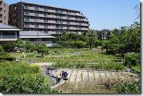 2014/8/6(水)堀切菖蒲園