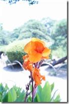 2014/7/26(土)堀切菖蒲園