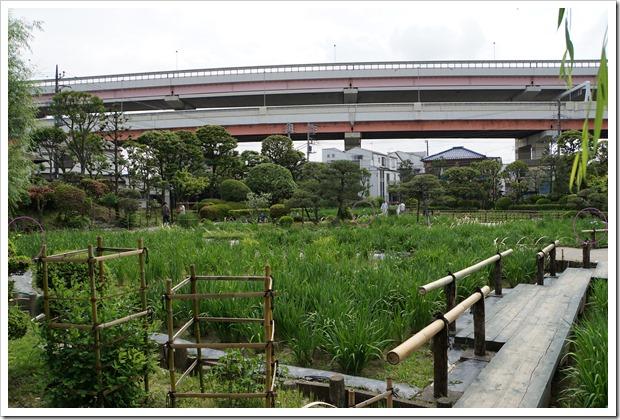 2015/05/18の堀切菖蒲園