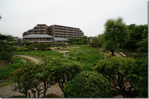 2014/5/20 堀切菖蒲園 定点観測