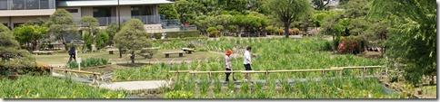 2014/5/24(土)堀切菖蒲園の開花状況