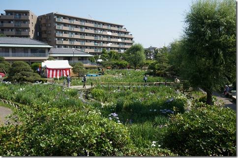2014/6/1 堀切菖蒲園の開花状況 3から4分