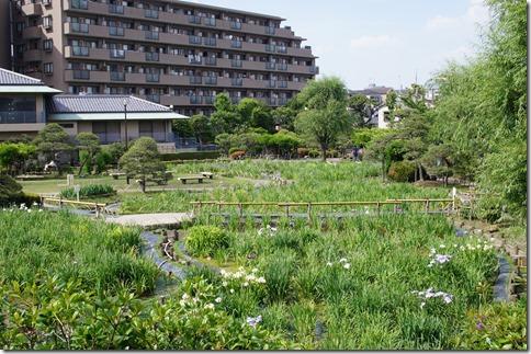 2014/5/28 堀切菖蒲園の開花状況