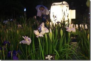 2013/6/21 堀切菖蒲園ライフアップの様子 19:21ごろ