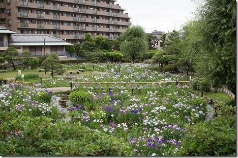 2014/6/12(木)堀切菖蒲園の開花状況
