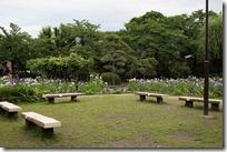 6/12 堀切菖蒲園中央の様子
