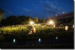 2014年の堀切菖蒲園ライトアップにて