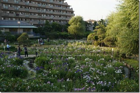 2014/6/15 堀切菖蒲園の開花状況