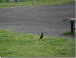 土手のグラウンドと鳥