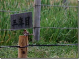 荒川水辺公園の雀
