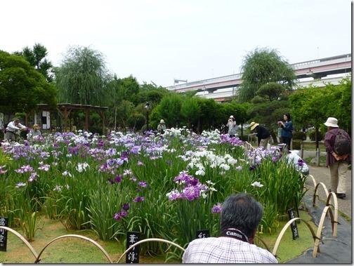 6/10(月)堀切菖蒲園 写真を撮る方ろ絵を描く方