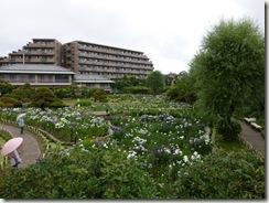 2011/6/17(金)堀切菖蒲園の開花状況
