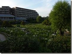 2011/6/23(木)堀切菖蒲園