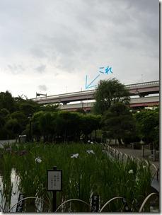 堀切菖蒲園からのスカイツリー