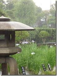 雨の堀切菖蒲園