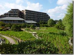 2012/7/2 花の季節が終わった堀切菖蒲園