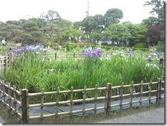 5/27(月)堀切菖蒲園