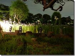 夜景モード 堀切菖蒲園