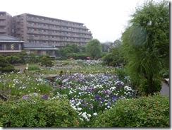 6/14(月) 梅雨入りの日の堀切菖蒲園