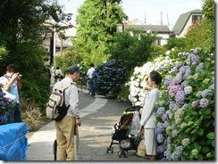 堀切菖蒲園周辺の紫陽花